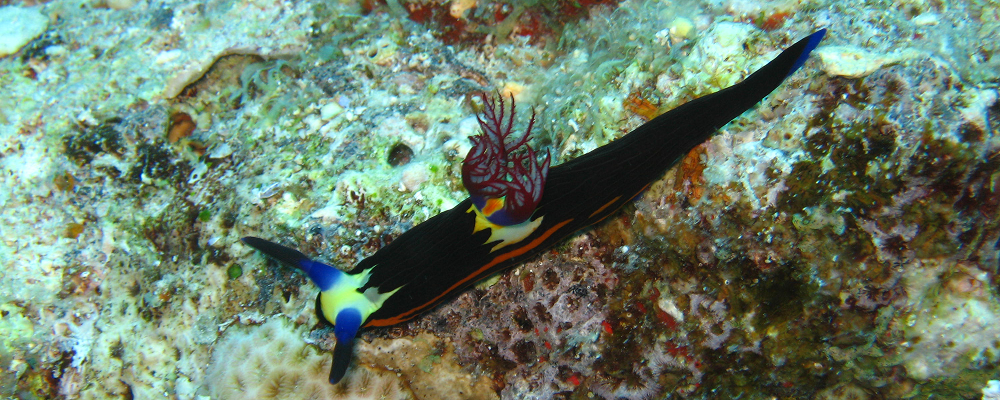 Nemo Divers / Startseite